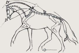 Dragen van de ribbenkast